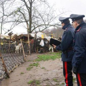 Animali in un fondo agricolo senza un riparo. Denunciato proprietario per maltrattamenti di animali