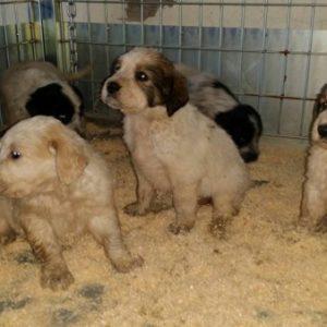 Napoli, cagnolini buttati nella spazzatura, tutti salvi ed adottati grazie ai dipendenti Asia