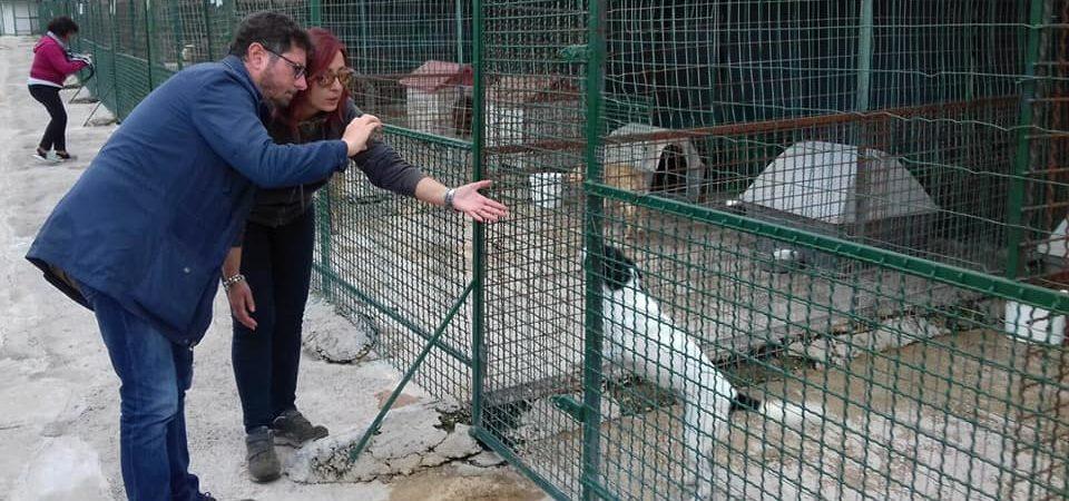 Napoli, 200 cani rischiano di morire di fame. Verdi. Servono aiuti immediati per evitare una strage
