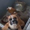 Afragola, traffico di cuccioli dall'Ungheria. Sequestrati 53 cani di razza. Guarda il video