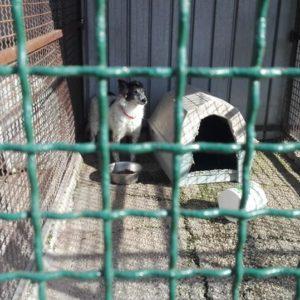 Giugliano, Crocchetta day per i cani che rischiano di morire di fame nel Canile dei 400. Si mobilitano i Verdi e i ragazzi ciechi del Colosimo