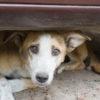 """Napoli, Cani e gatti randagi non saranno uccisi in caso di emergenza sul Vesuvio. Borrelli: """"Era una disposizione assurda e, giustamente, è stata revocata"""""""